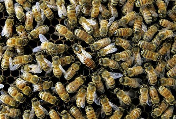 070615_ap_honeybees_02