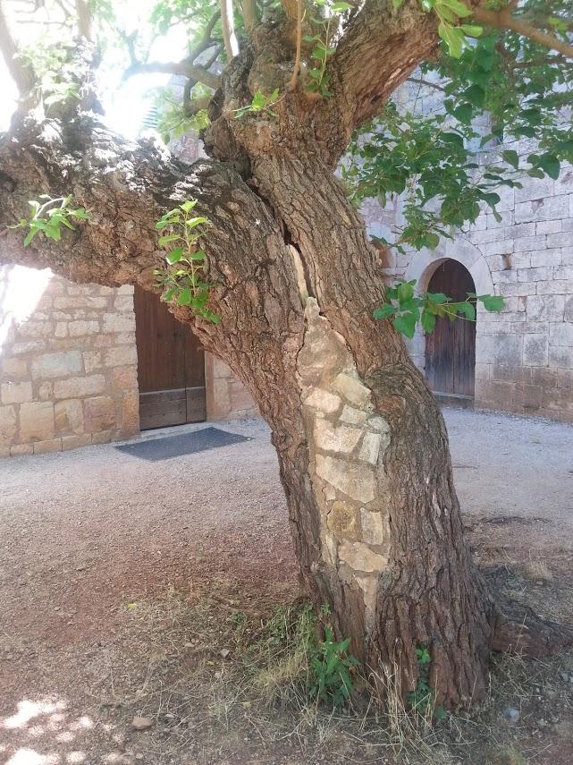 thoronet tree